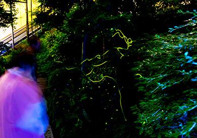 庭園内で蛍との距離が近い。